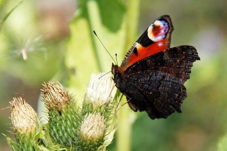 Гусеница — строение, цикл жизни, среда обитания, питание, борьба с вредителями + 94 фото