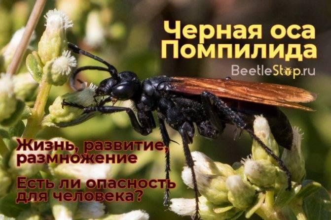 Чем удивляют осы