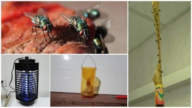 Быстрые способы избавления от назойливых мух в квартире или доме