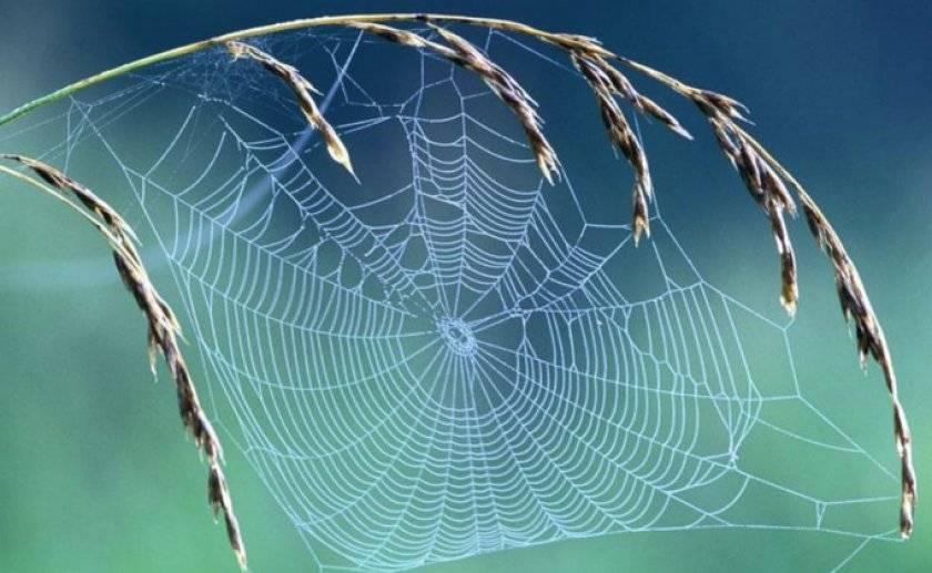 Какие узлы использует паук, когда плетёт паутину? откуда у паука нить? как паук изготавливает паутину? как плетется паутина
