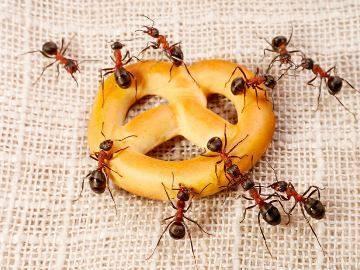 Кчему снятся муравьи вбольшом количестве