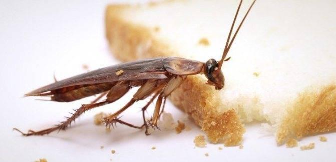 Полезная информация для покупателей о геле от тараканов «убойная сила»
