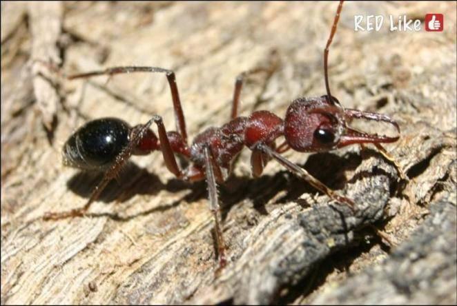 Мир муравья