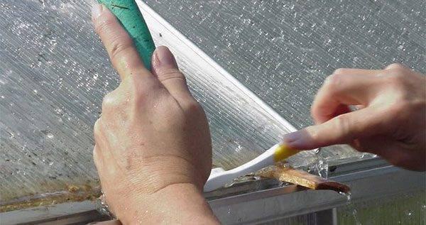 Как и чем обработать теплицу из поликарбоната весной: нюансы подготовки и обеззараживания