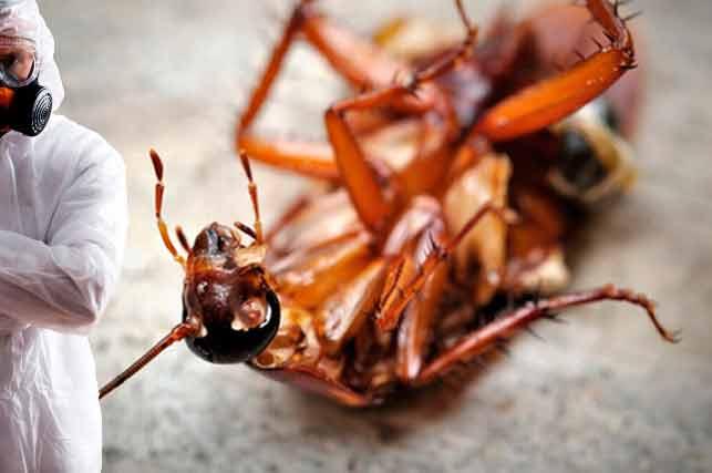 Дезинсекция от тараканов: полезные советы