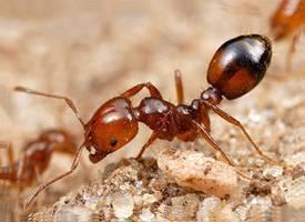 Маленькие муравьи: способы борьбы