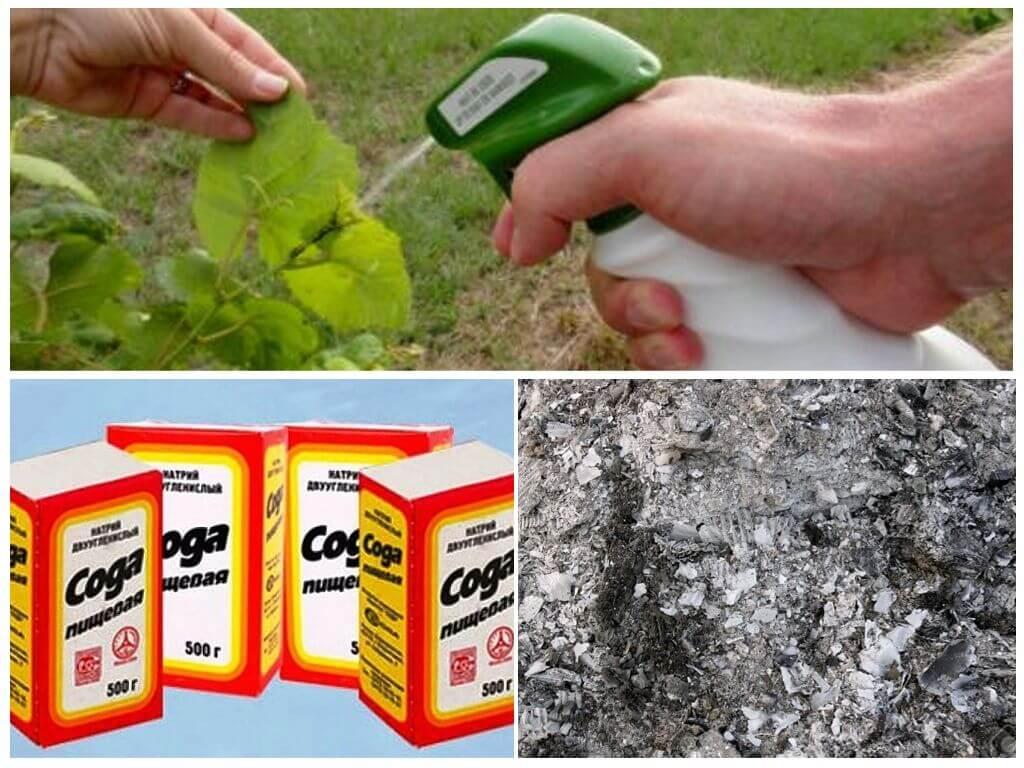 Использование древесной золы против муравьев на огороде или участке