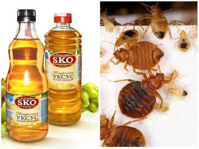 Применение дихлофоса против различных насекомых