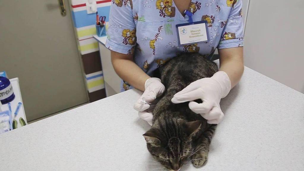Какие капли против эктопаразитов у кошек самые безопасные, эффективные и удобные?