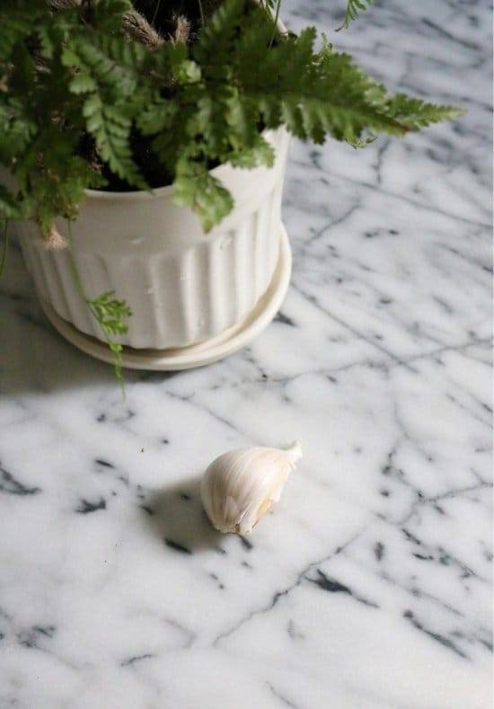 Боремся с белой мошкой на помидорах – как избавиться навсегда от мошки в теплице!