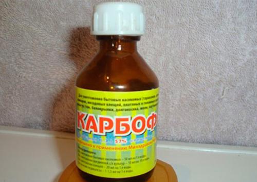 Карбофос – быстрое и простое истребление клопов