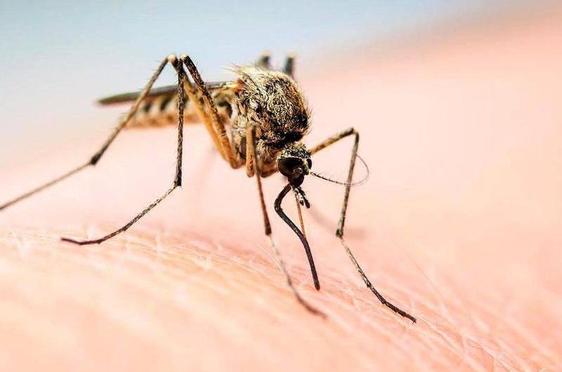 Почему от укуса комара появляется волдырь