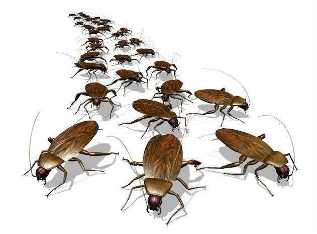 Почему снится много тараканов