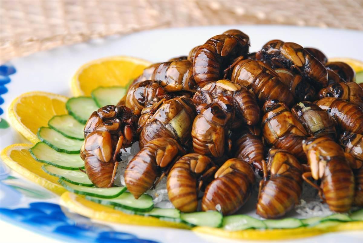 25 самых раздражающих и противных насекомых в мире