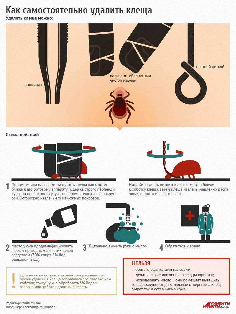 Что делать, если укусил клещ? как вытащить клеща в домашних условиях? симптомы, диагностика и лечение заболеваний после укуса боррелиозного, энцефалитного клеща и др.