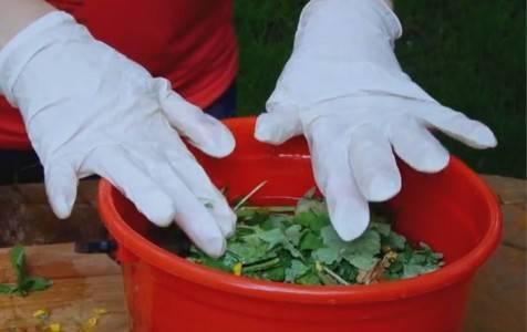 Чистотел: как с пользой применять чистотел на даче