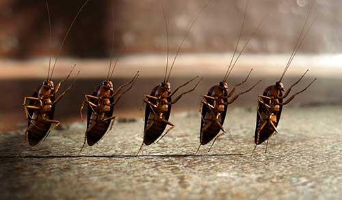 Тараканье гнездо. что нужно насекомым и где живут тараканы в квартире, как их изгнать. борная кислота против личинок