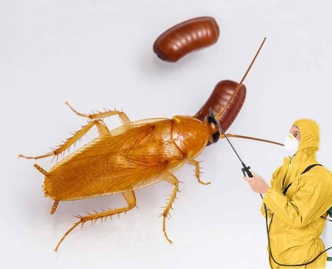 Чем травить тараканов в домашних условиях предпочтительнее?