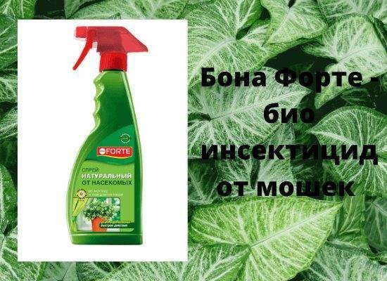 Как избавиться от цветочных мошек?