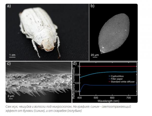Майский жук (хрущ) – виды, особенности развития и поведения (23 фото с описанием + 1 видео)