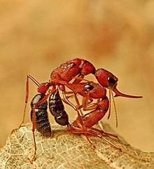 Продолжительность жизни муравья