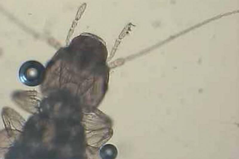 На орхидее появился паутинный клещ: причины и способы как избавиться