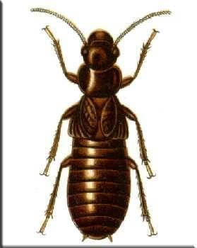 Майнкрафт как избавиться от термитов. что делать, если термиты появились в вашем доме? органические убийцы термитов