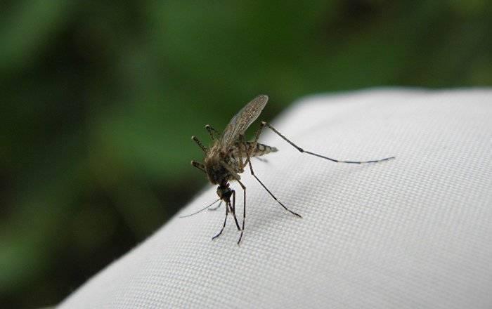 Способы как избавиться от комаров в домашних условиях