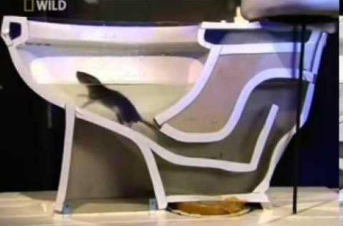 Что делать если в квартире завелась крыса?