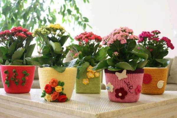 Мошки в комнатных цветах - как избавиться в домашних условиях?