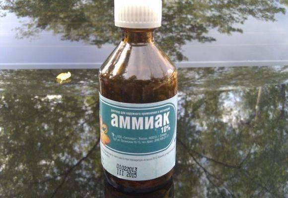Нашатырный спирт от насекомых: 5 способов применения