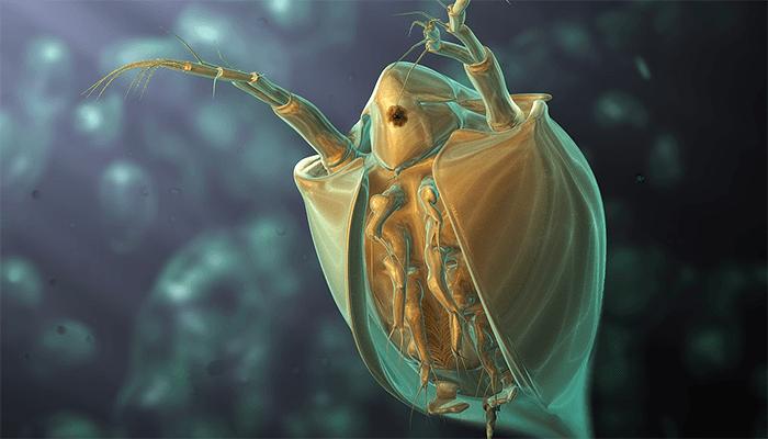 К чему снятся блохи или много паразитов