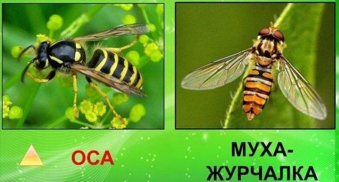 Кусают ли обычные мухи. почему мухи кусают в августе. как избавиться от жигалок