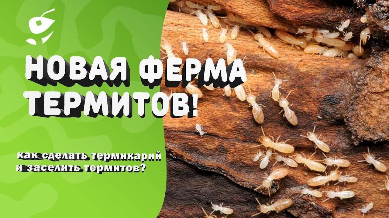 Что делать, если термиты появились в вашем доме? как избавиться от термитов? майнкрафт как избавиться от термитов