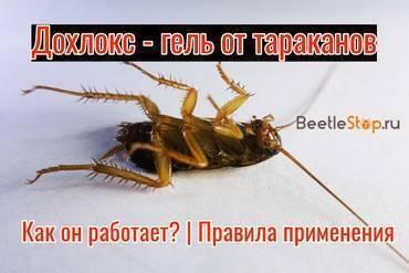 Дихлофос от тараканов средство без запаха, и другие отличия современного аэрозоля от советского тезки