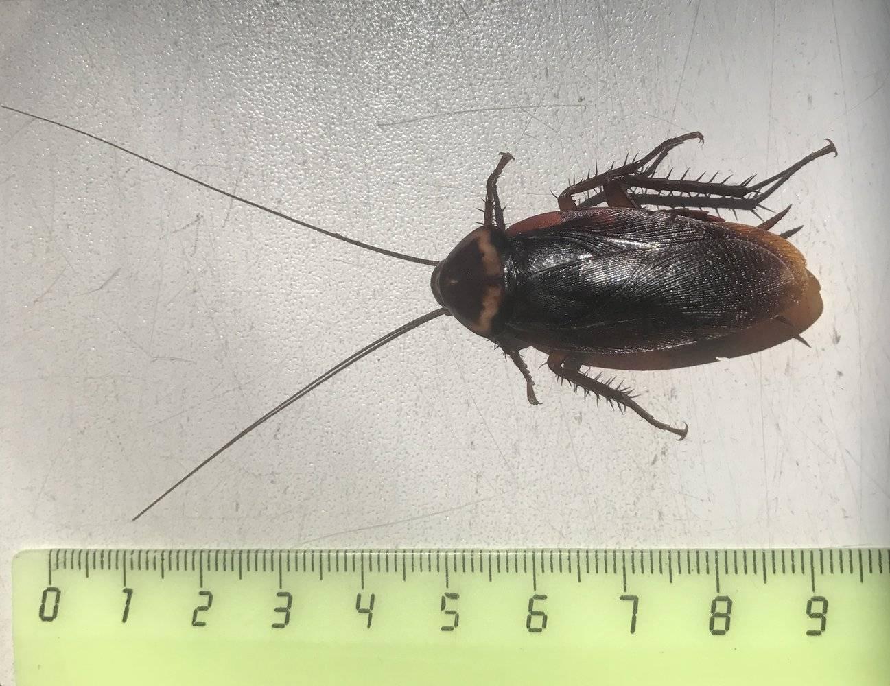 Чем опасны тараканы в квартире?