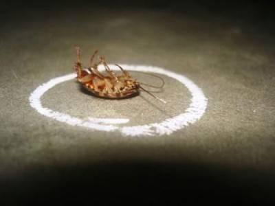 Карандаш от клопов — насколько эффективный метод в борьбе с паразитами?