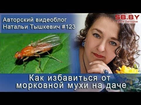 Как избавиться от капустной мухи
