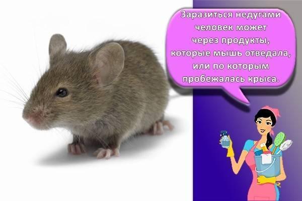 Борьба с крысами в частном доме — средства и методы