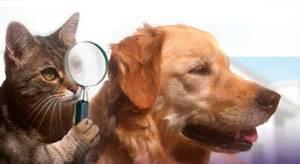 Собаку укусил клещ — первая помощь и профилактика