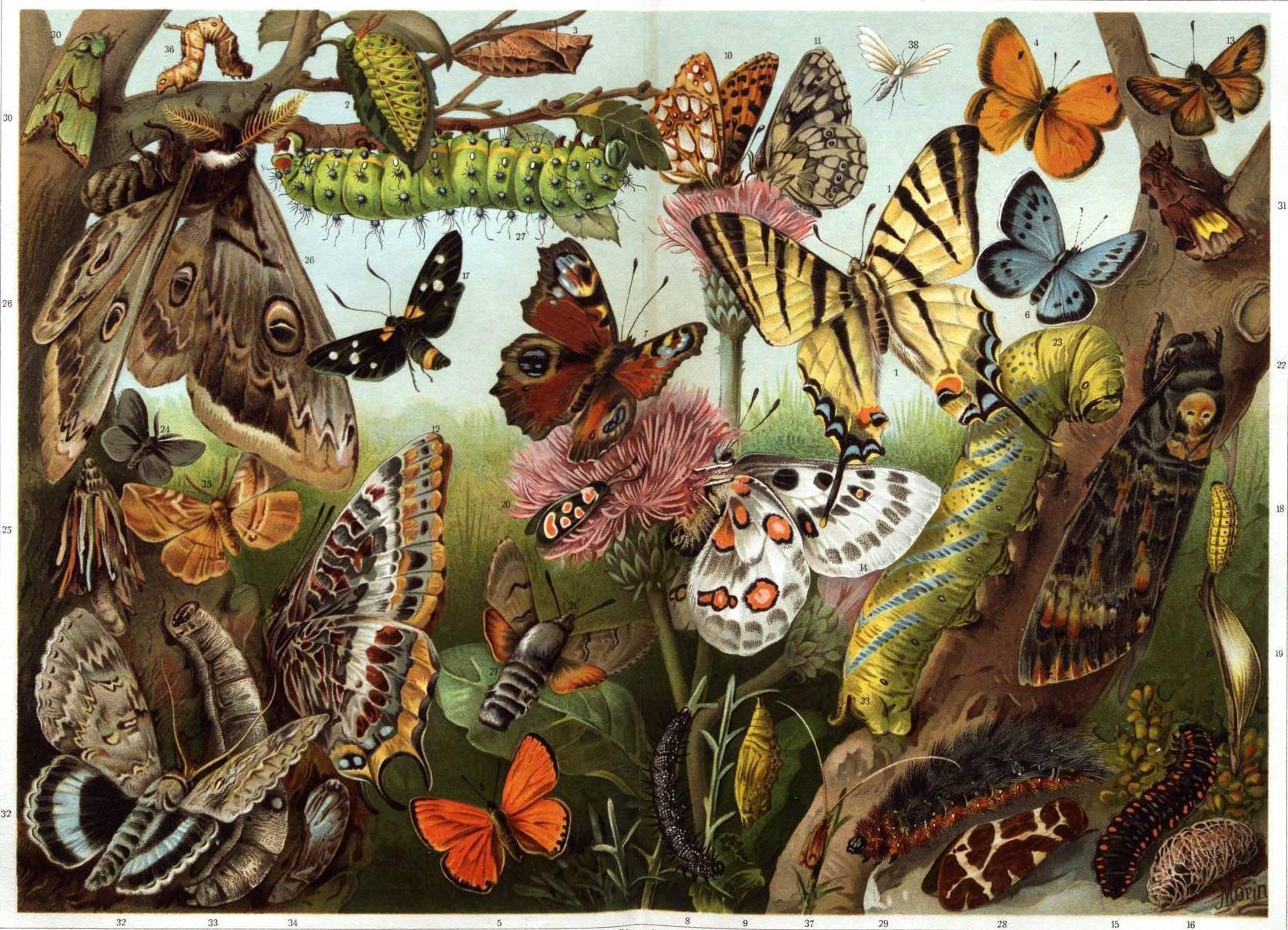 Роющие осы – заботливые хищники