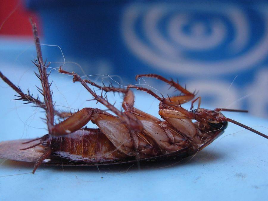 Топ-10 интересных фактов о тараканах