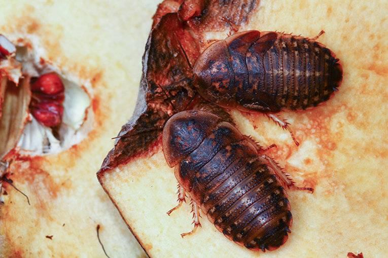 Кто питается тараканами в домашних условиях и в природе?