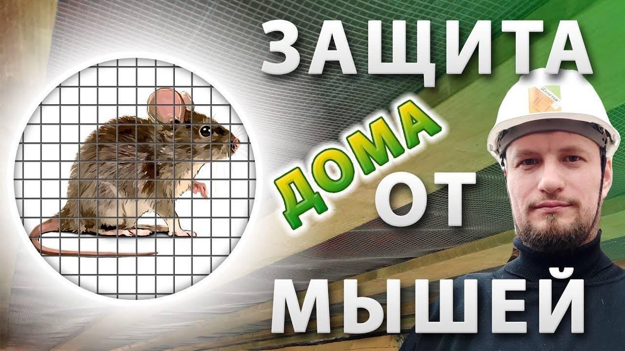 Как защитить каркасный дом от грызунов – особенности домов и причины появления мышей и крыс