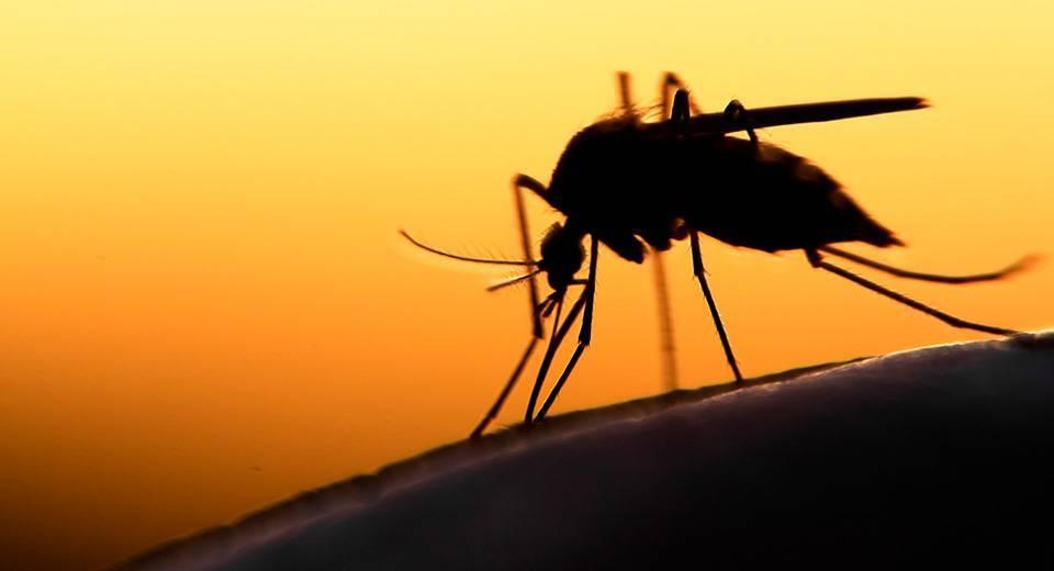 Последовательность действий, если в ухо попало насекомое