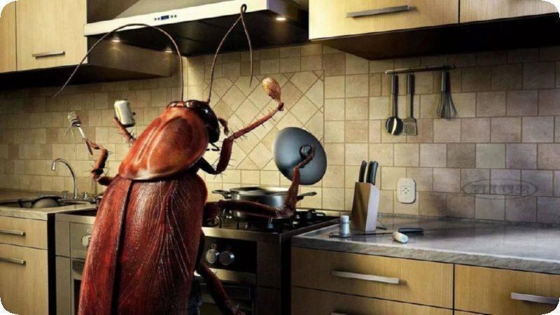 Какие ловушки для тараканов самые эффективные