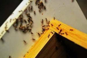 Как вывести муравьев из дома — причины, методы и рекомендации как избавиться раз и навсегда (100 фото)