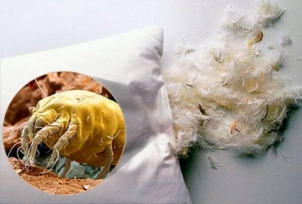 Как избавить себя и детей от постельных клещей