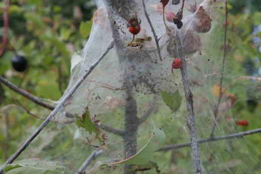Как бороться с паутинным клещом на огурцах в открытом грунте и в теплице