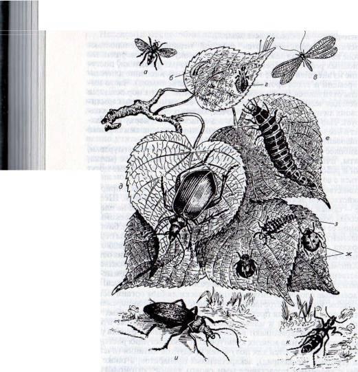 Стрекозы